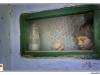 pro-image-kids_elias-aneculaesi_8-ani-06