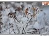 pro-image-kids_julie-tocariuc-04